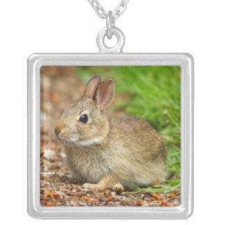 WA, Redmond, lapin de bébé de lapin oriental Pendentif Carré