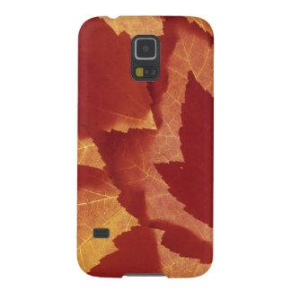 WA, réserve forestière de Wenatchee, feuille Protections Galaxy S5