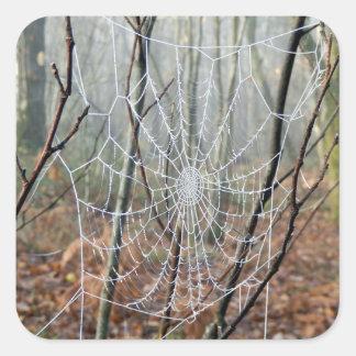 Web d'autocollant européen d'araignée de jardin sticker carré