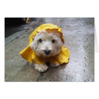 Westie dans le Mac jaune de pluie ! Cartes