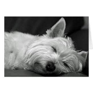 Westie endormi cartes