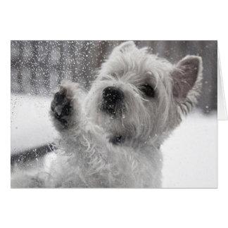 Westie sous la pluie cartes