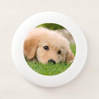Wham-O Frisbee Le chiot mignon de golden retriever rêve la photo