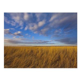 Wheatgrass et cieux dramatiques au lac Freezeout Carte Postale