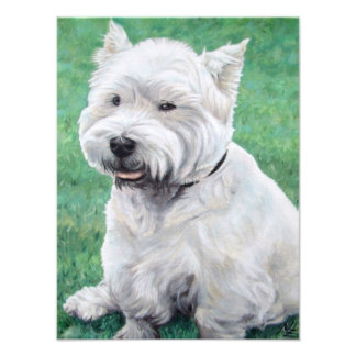White ouest Highland terrier Photographes