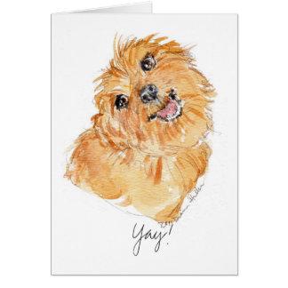 YAy ! pensées b'day de chien de la carte YDP
