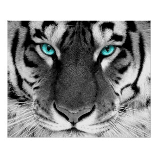 Yeux blancs d'affiche de tigre