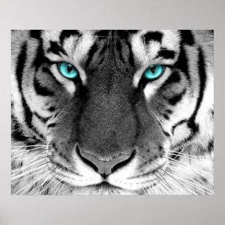 Yeux blancs d'affiche de tigre affiches