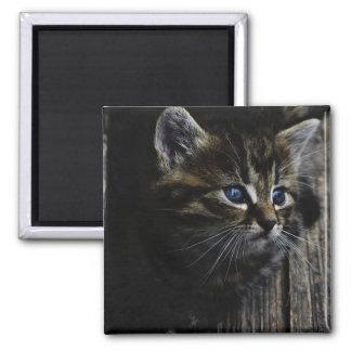 Yeux bleus de chaton aimant