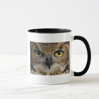 Yeux de hibou mugs