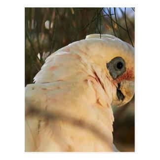 Yeux d'oiseau cartes postales