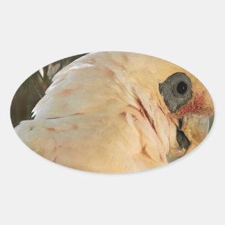 Yeux d'oiseau sticker ovale