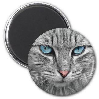 Yeux gris du chat w/Blue Aimant
