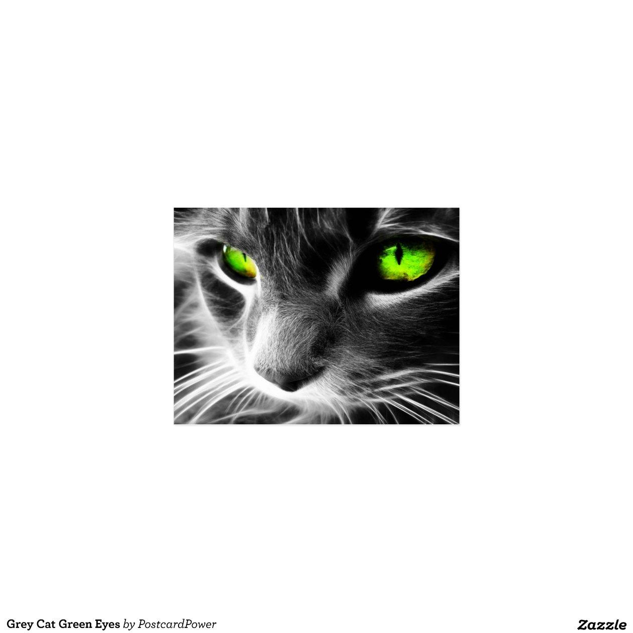 Yeux verts de chat gris cartes postales zazzle - Yeux gris vert ...