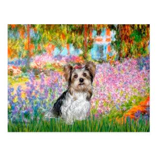 Yorkshire Terrier (Biewer) - jardin Carte Postale