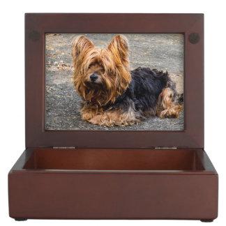 Yorkshire Terrier Boîte À Souvenirs