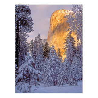 Yosemite - EL Capitan allumé par lumière du soleil Cartes Postales