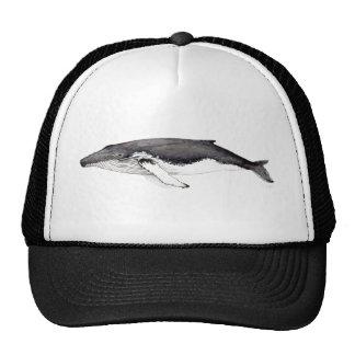 Yubarta, baleine bossue casquette