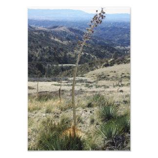 Yucca - copie de photo