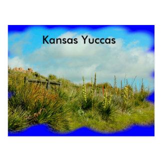 Yuccas du Kansas sur une carte postale de flanc de