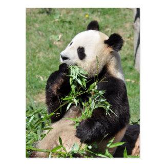 Yum bambou ! Carte postale de panda