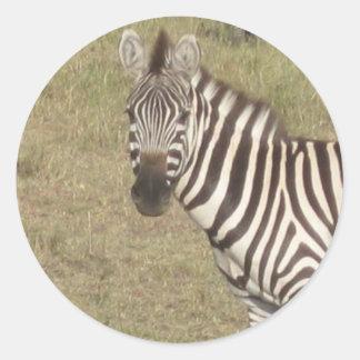Zèbre africain sticker rond