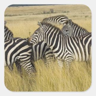Zèbre de plaines (quagga d'Equus) dans l'herbe, Sticker Carré