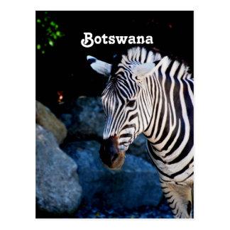 Zèbre du Botswana Cartes Postales