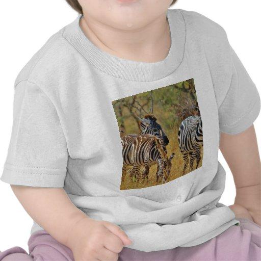 Zèbre T-shirts