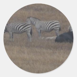 zèbres et vaches dans le domaine sticker rond
