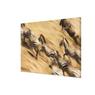 Zèbres (quagga d'Equus) et gnou Toiles