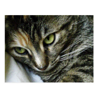 Zen Kitty Cartes Postales