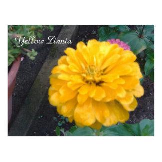 Zinnia jaune carte postale
