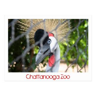 Zoo de Chattanooga Carte Postale