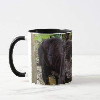Zoo de ville de Belize. Panthère noire Mug