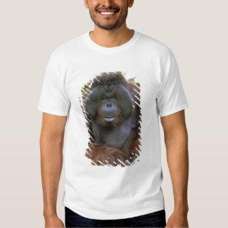 Zoo des Etats-Unis, la Californie, San Diego. T-shirts