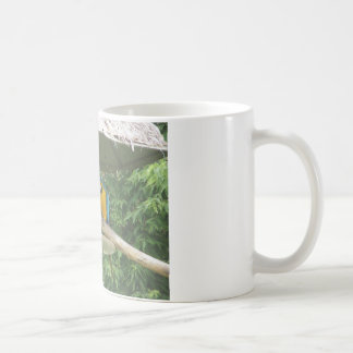zoo mugs à café